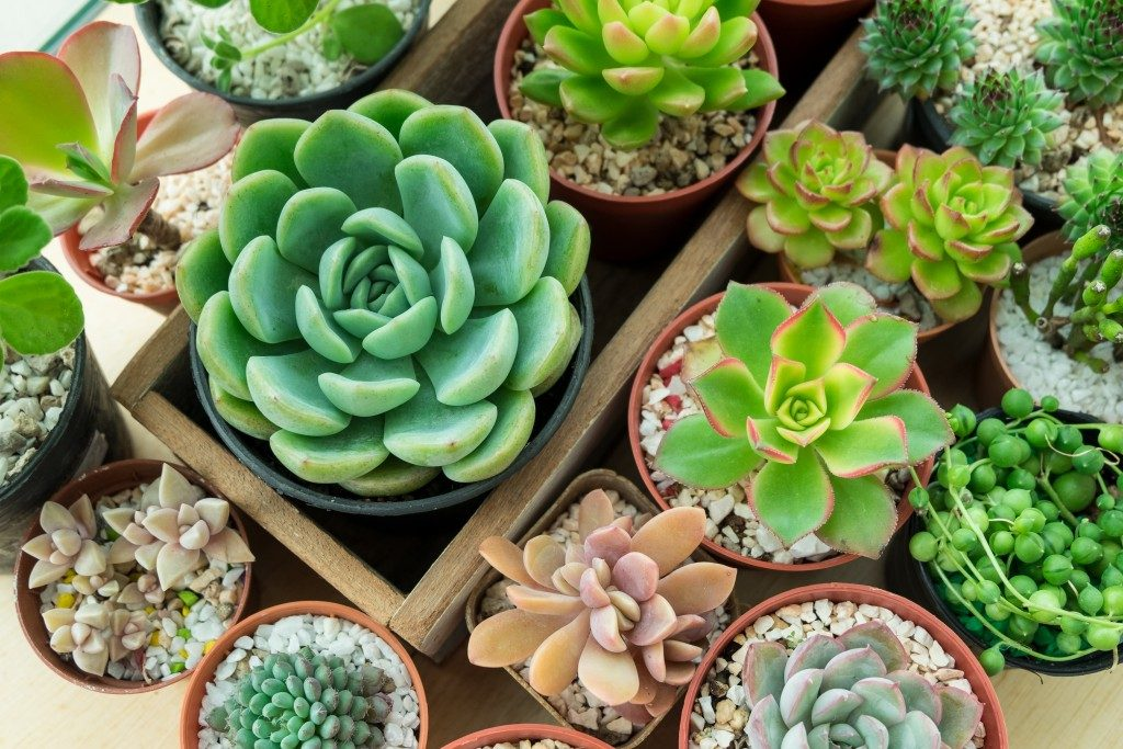 Top view of succulents